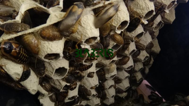 Interiér bedny pro šváby