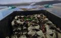 Pod víkem bedny pro šváby s kovovým pletivem