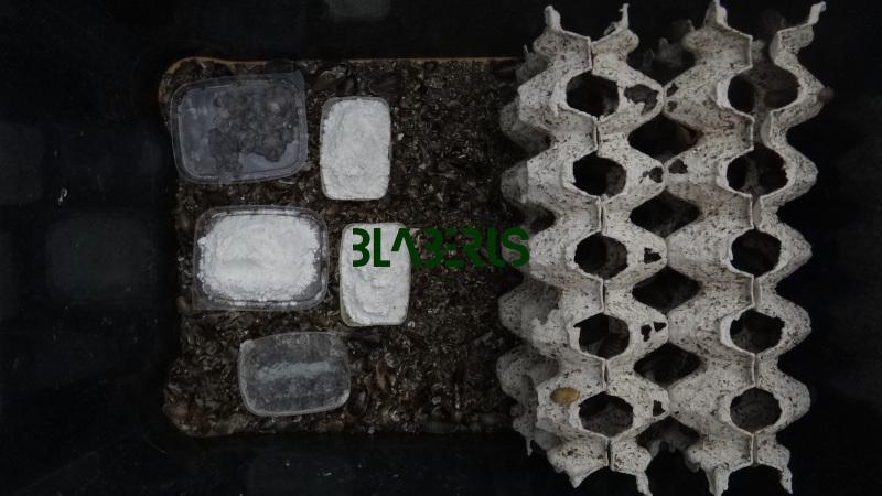 Interiér bedny pro šváby rozjezd 30% s krmítky a napáječkami