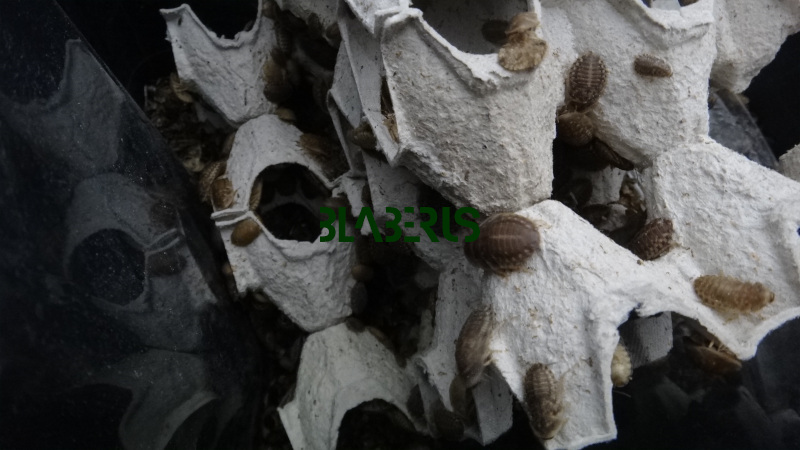 Interiér bedny švábů stupně modulů