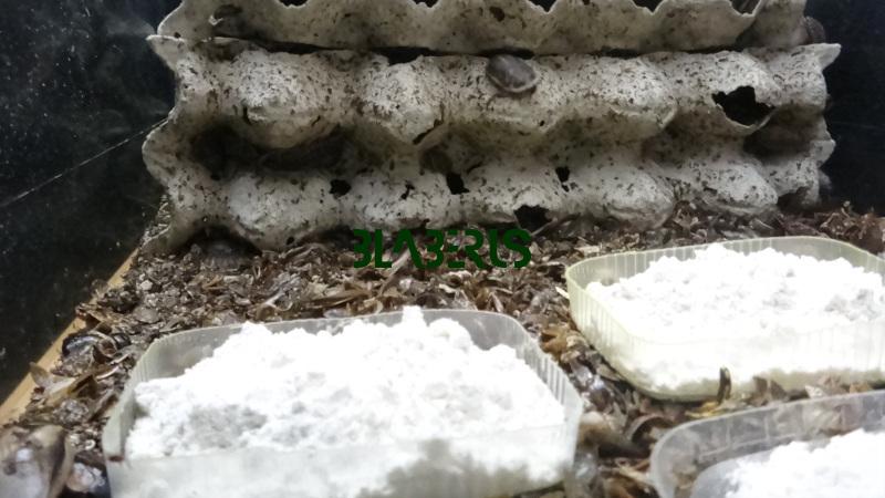 Jak vidí krmítka a napáječky šváb
