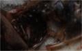 Čerstvý svlek jako potrava švábů